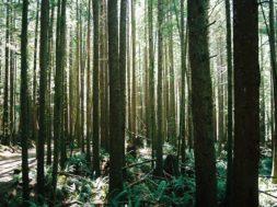 forest-1368297.jpg