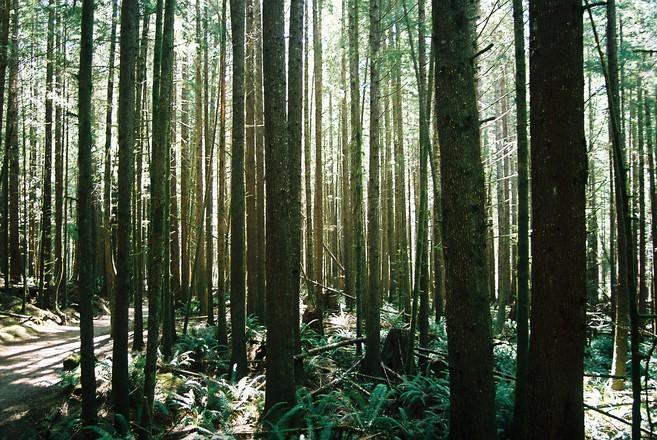 OLE TEADLIK! Kuidas toimida metsas ära eksides