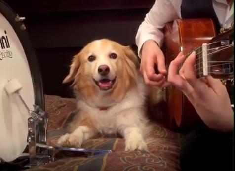VIDEO! NUNNUMEETER PÕHJAS! Vaata, kuidas mehe bändikaaslaseks on koer, kes lööb rütmi