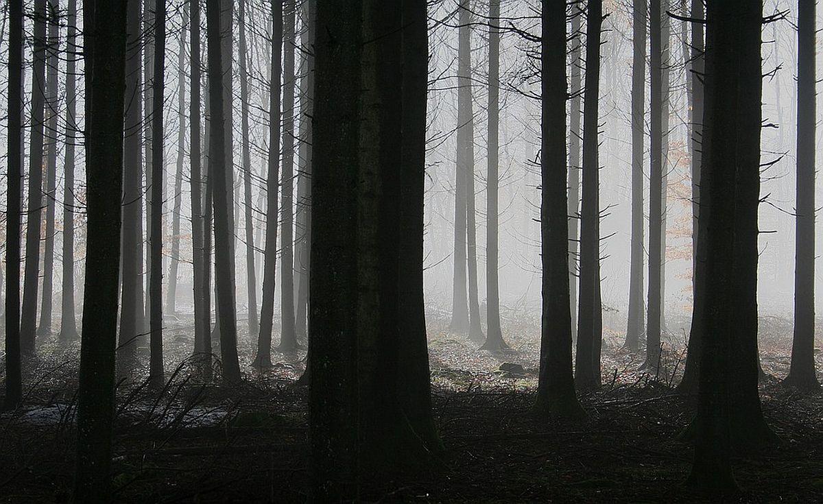 loodus-mets-pixabay