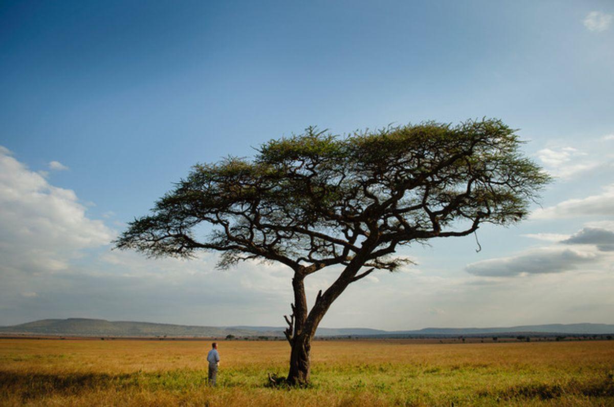 """MAA PÄEV I Viasat Nature näitab täna filmi """"Serengeti reeglid"""""""